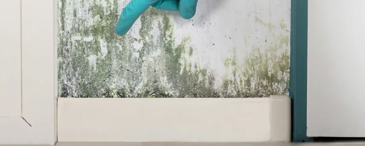 Remove Mold From The Kitchen Tiles