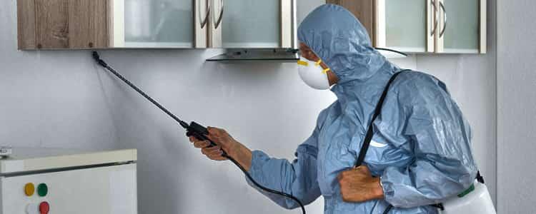 Best Pest Control Unley